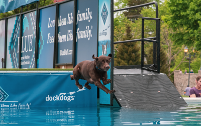 International Dockdogs Competition