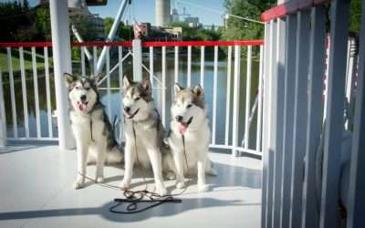 Annual Canine Cruise on the Cass River