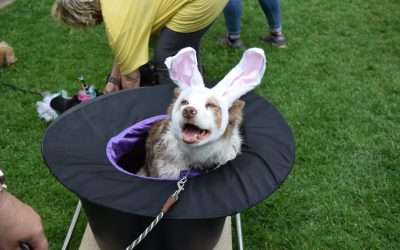 Best Canine Costume Contest