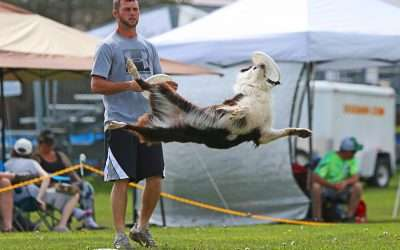 Disc Dogs of Michigan Competition