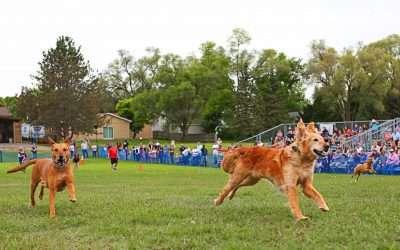 50 Yard Big Doggie Fun Run Race