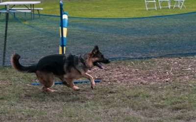 Dog Lovers Days Lure Course