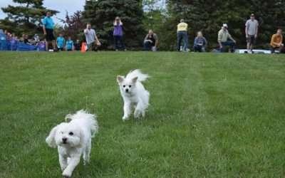 25 Yard Small Doggie Fun Run Race