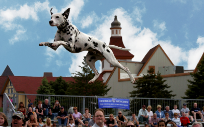 Forbes.com – Top Pet-Friendly Festivals In North America