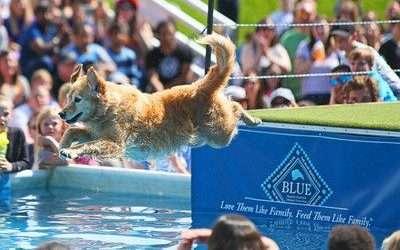 Yahoo Finance – Frankenmuth Dog Bowl, Inc. commemorates nonprofit status with grand celebration